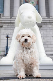 Senior White Terrier Mix Dog Sitting In Front of Dog Statue