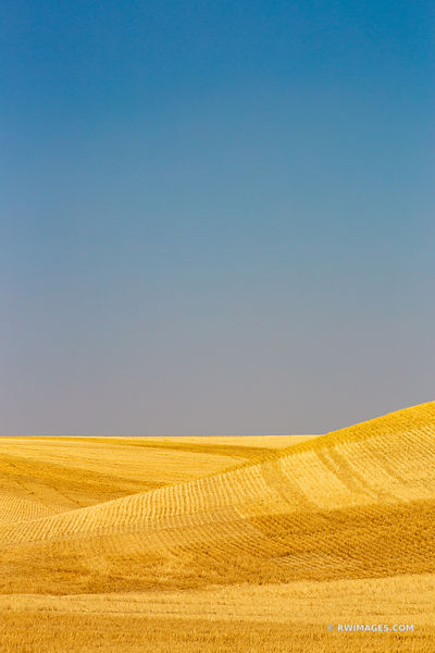 FIELDS OF GOLD PALOUSE REGION EASTERN WASHINGTON STATE LANDSCAPE COLOR VERTICAL