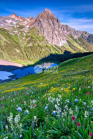Blooming Flowers Above Blue Lakes