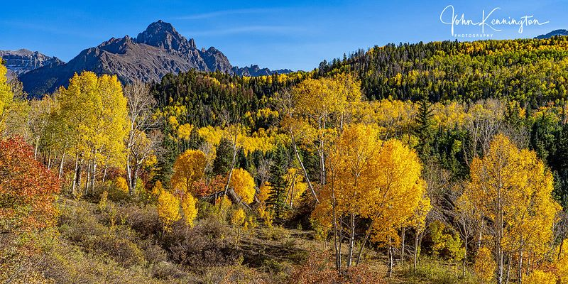 Mount Sneffels Aspens (Panoramic), Uncompahgre National Forest, Colorado