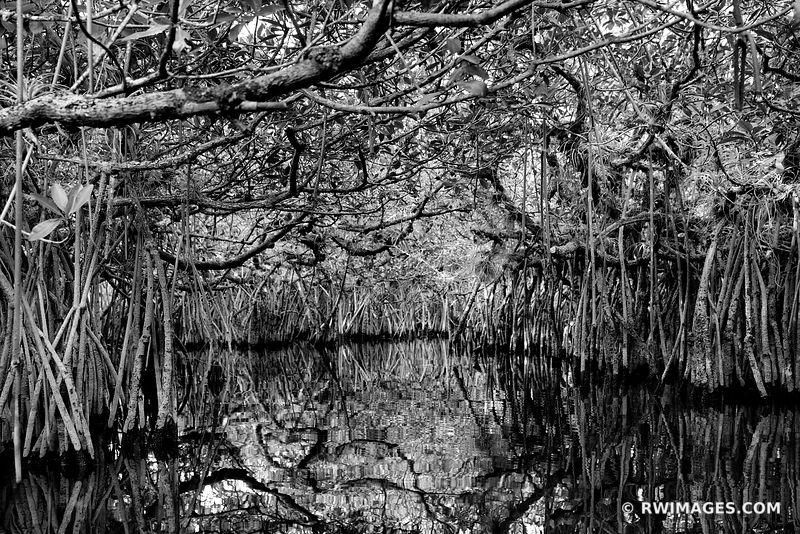 TURNER RIVER MANGROVE TUNNELS CANOE RIVER TRAIL BIG CYPRESS NATIONAL PRESERVE EVERGLADES FLORIDA BLACK AND WHITE