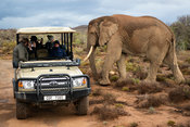 Tourists on game drive watching African elephant, Loxodonta africana africana, Sanbona Wildlife Reserve, South Africa