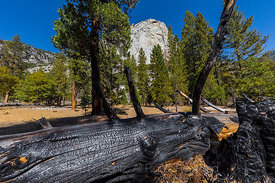 Burnt Tree and North Dome in Kings Canyon National Park