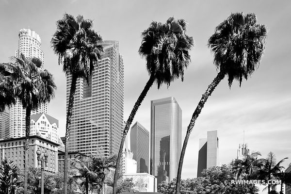 PALM TREES DOWNTOWN LOS ANGELES CALIFORNIA BLACK AND WHITE