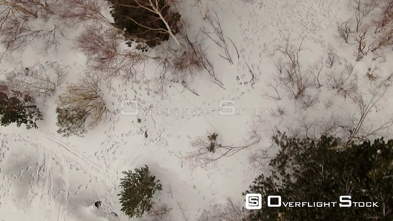 Aerial low fly over trees and snow on mount Etna Sicily