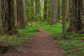 Trail Winding through Federation Forest State Park