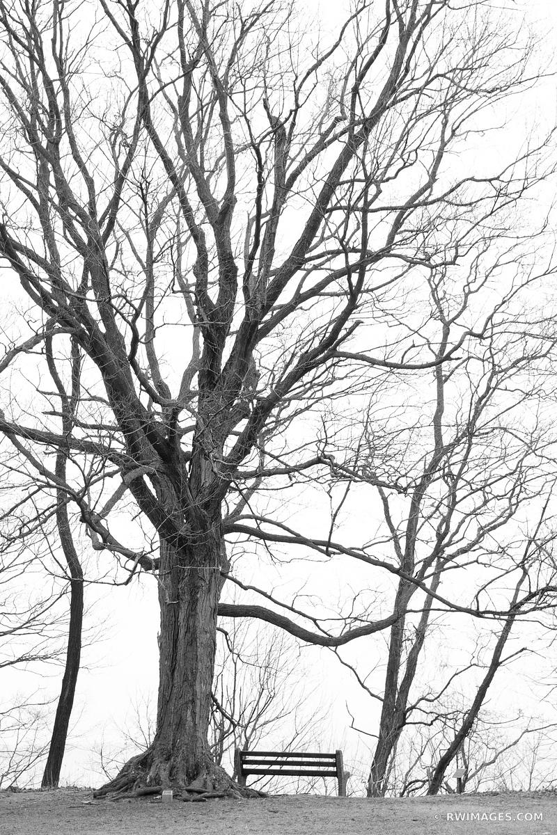 WINTER TREE AND A BENCH HIGHLAND PARK ILLINOIS CHICAGO NORTHSHORE SUBURBS CHICAGOLAND WINTER BLACK AND WHITE VERTICAL
