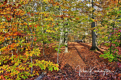 Beech Forest Color, Great Swamp National Wildlife Refuge, New Jersey