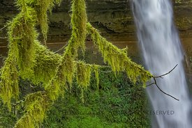 Mossy Branches with North Falls in Silver Falls State Park