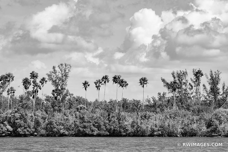 TALL PLAM TREES ISLAND GULF OF MEXICO TEN THOUSAND ISLANDS EVERGLADES NATIONAL PARK FLORIDA BLACK AND WHITE