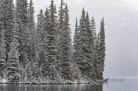 Conifer Forest at Edge of Lake O'Hara in Yoho National Park
