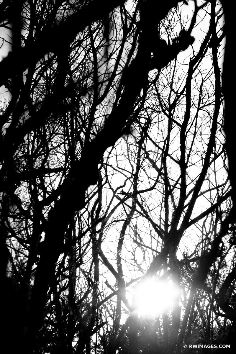 MANGROVE FOREST SUNSET WEST LAKE TRAIL EVERGLADES FLORIDA BLACK AND WHITE VERTICAL