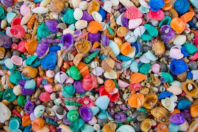 Rainbow SeaShells / Florida