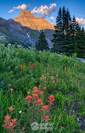 Paintbrush in Yankee Boy Basin