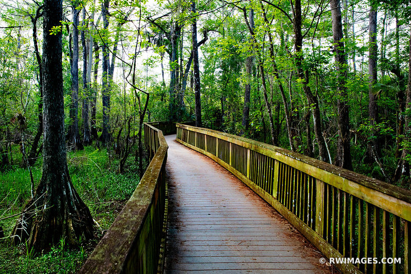 BOARDWALK KIRBY STORTER PARK BIG CYPRESS NATIONAL PRESERVE EVERGLADES FLORIDA