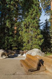 Wooden Bench at Giant Forest Museum in Sequoia National Park