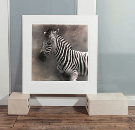 Zebra editioned print (in Mat)