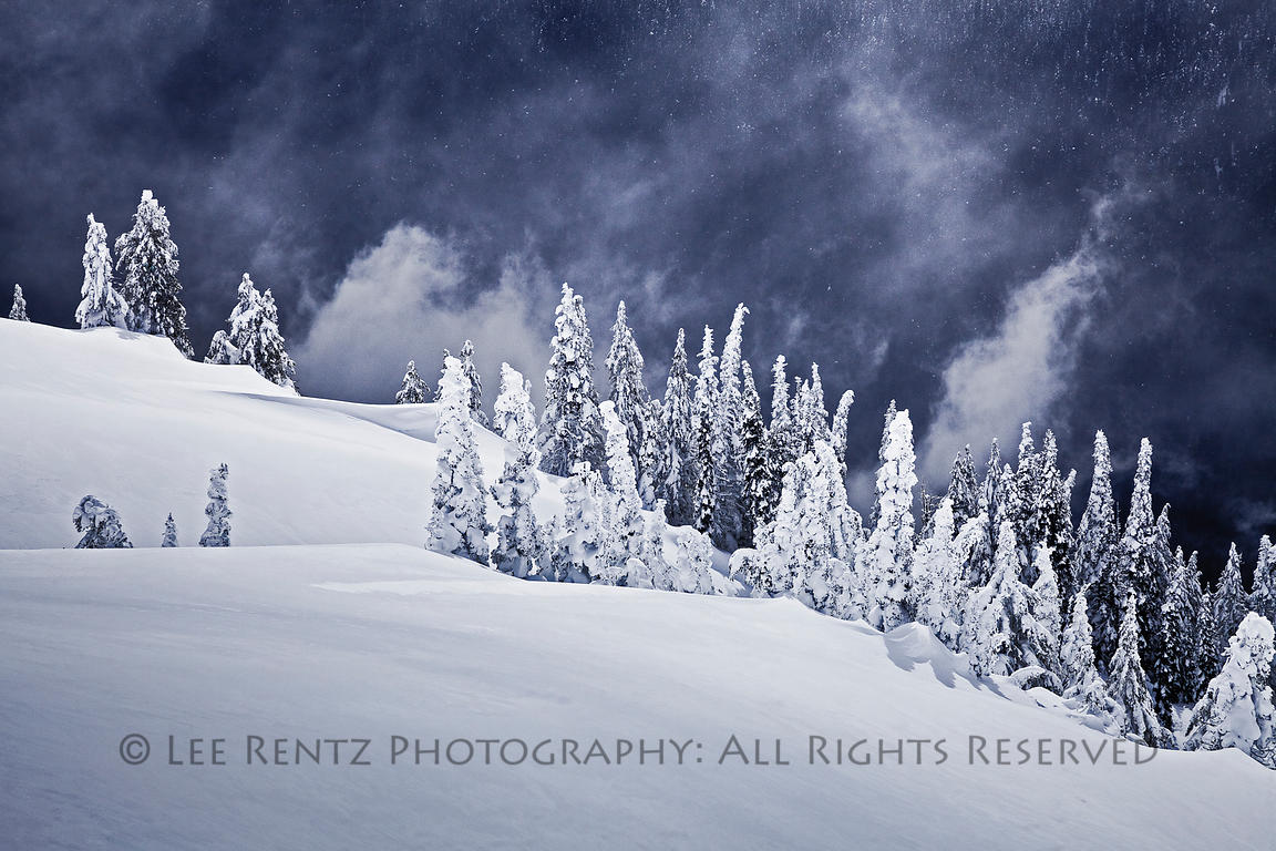 WINTER STORM ON HURRICANE RIDGE