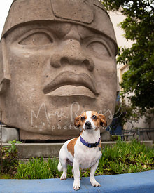 Worried-Looking Dachshund Mix Near Mexican Sculpture