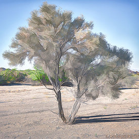 Smoke Tree Wash (manipulated)