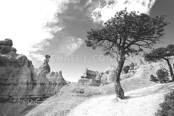 Tree In Bryce Canyon (B&W)