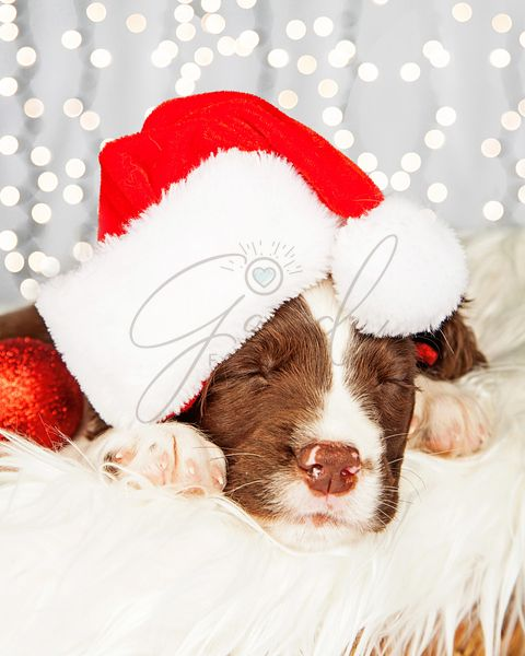 Puppy Wearing Santa Hat While Napping On Fur