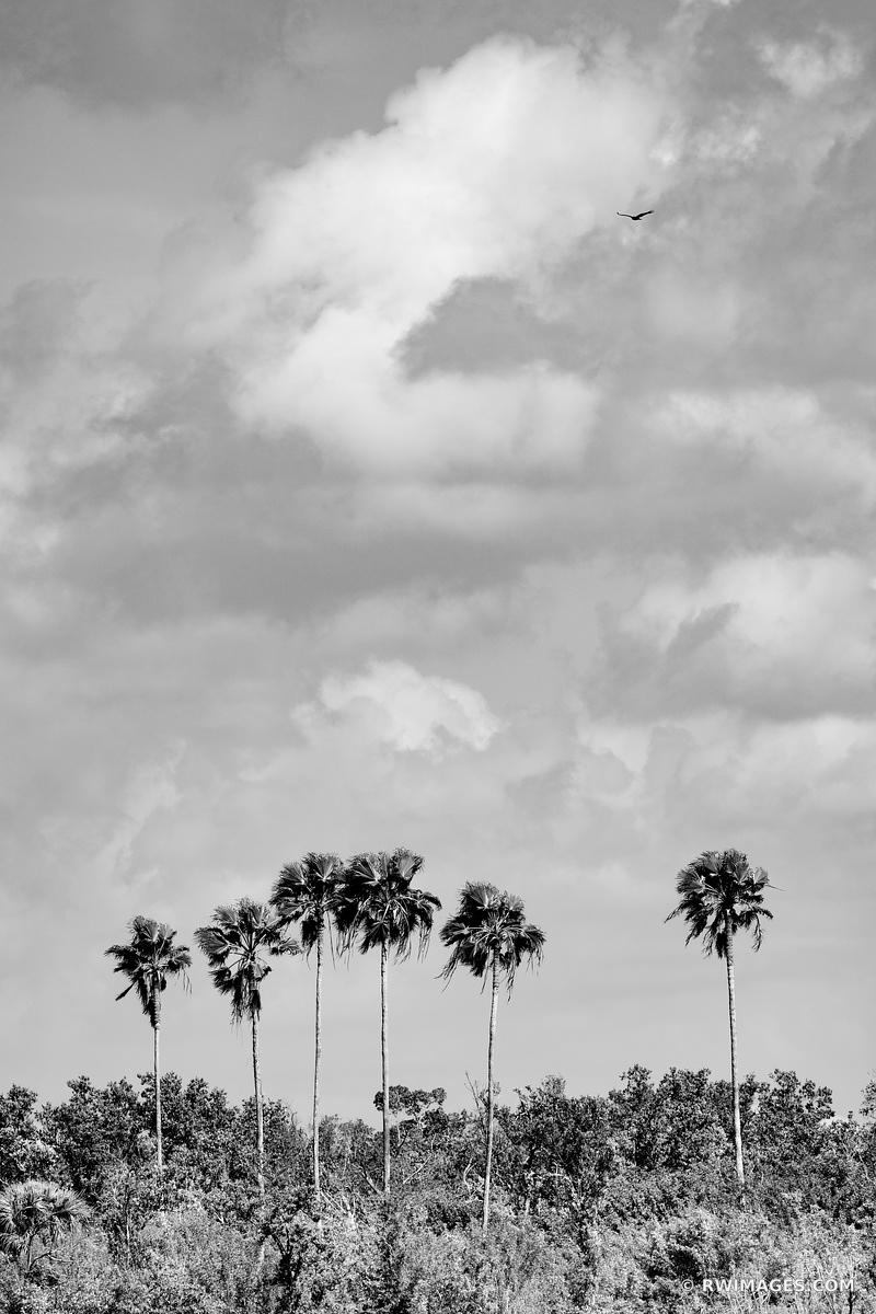 TALL PALM TREES ISLAND GULF OF MEXICO TEN THOUSAND ISLANDS EVERGLADES NATIONAL PARK FLORIDA BLACK AND WHITE VERTICAL