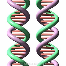 DNA Right and Left, Right and Wrong, Green Pink