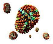 Influenza Virus Group Close Up