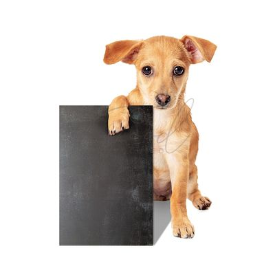 Cute Puppy Dog Holding Blank Chalkboard