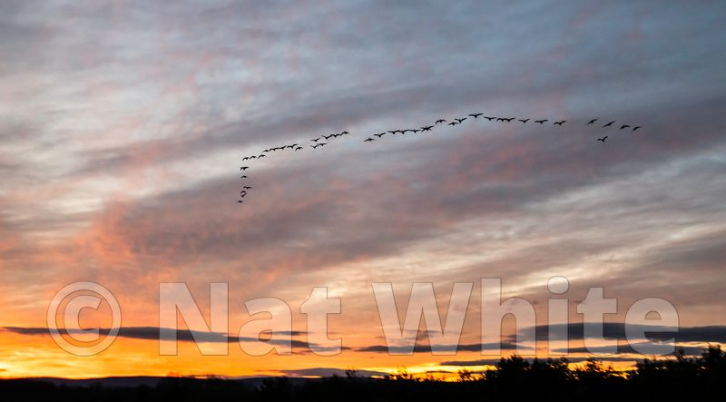 Super_sunset_with_geese-4012_January_02_2021_