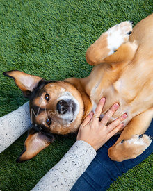 Grinning Dog Lying on Woman's Leg