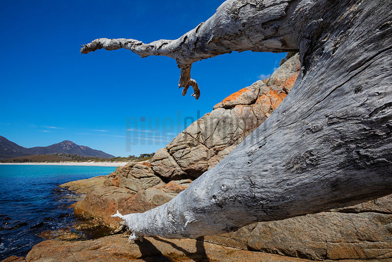Fallen Dead Tree in the Rocks at Wineglass Bay