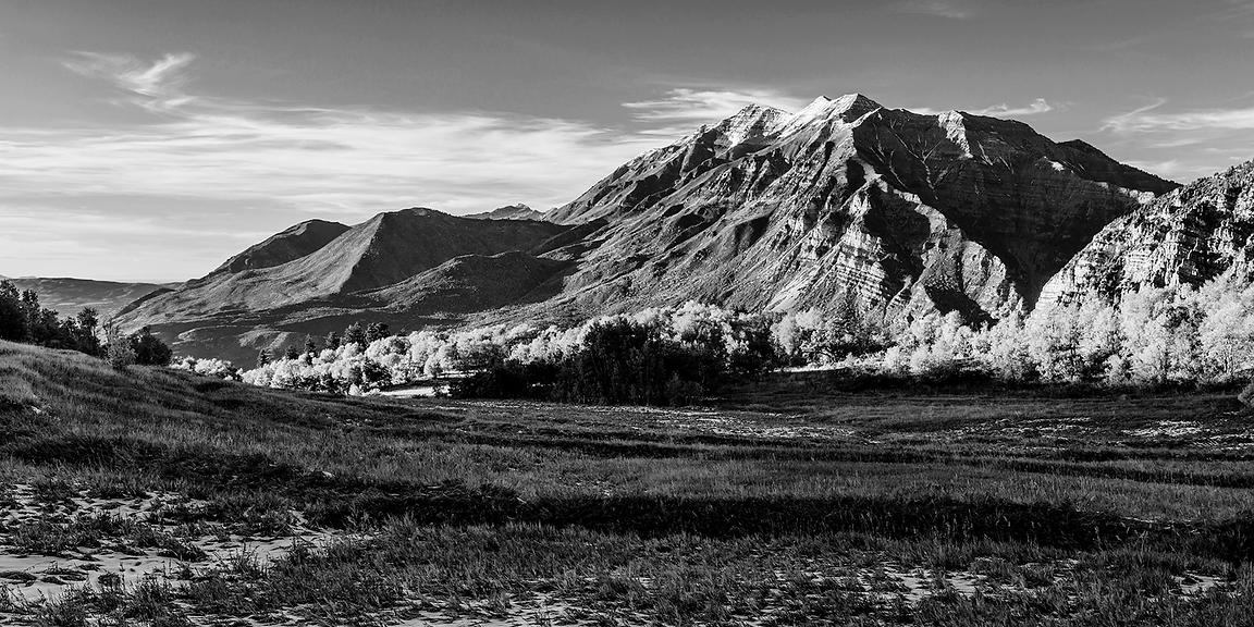 Fall Meadow B&W