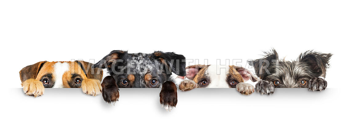 Dogs Peeking Eyes and Paws Over White Web Banner