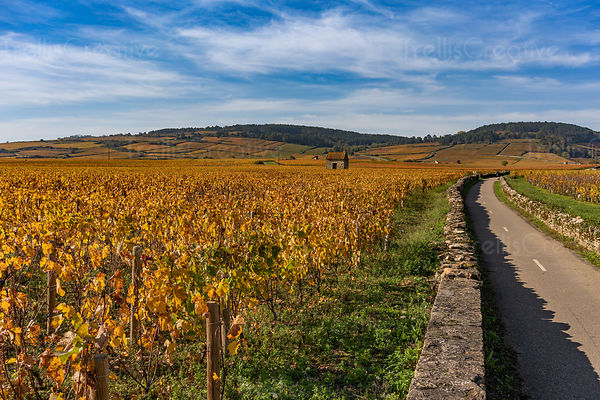 Old stone walled bike path leads through famed Burgundy vineyards and wineries in Beaune, France