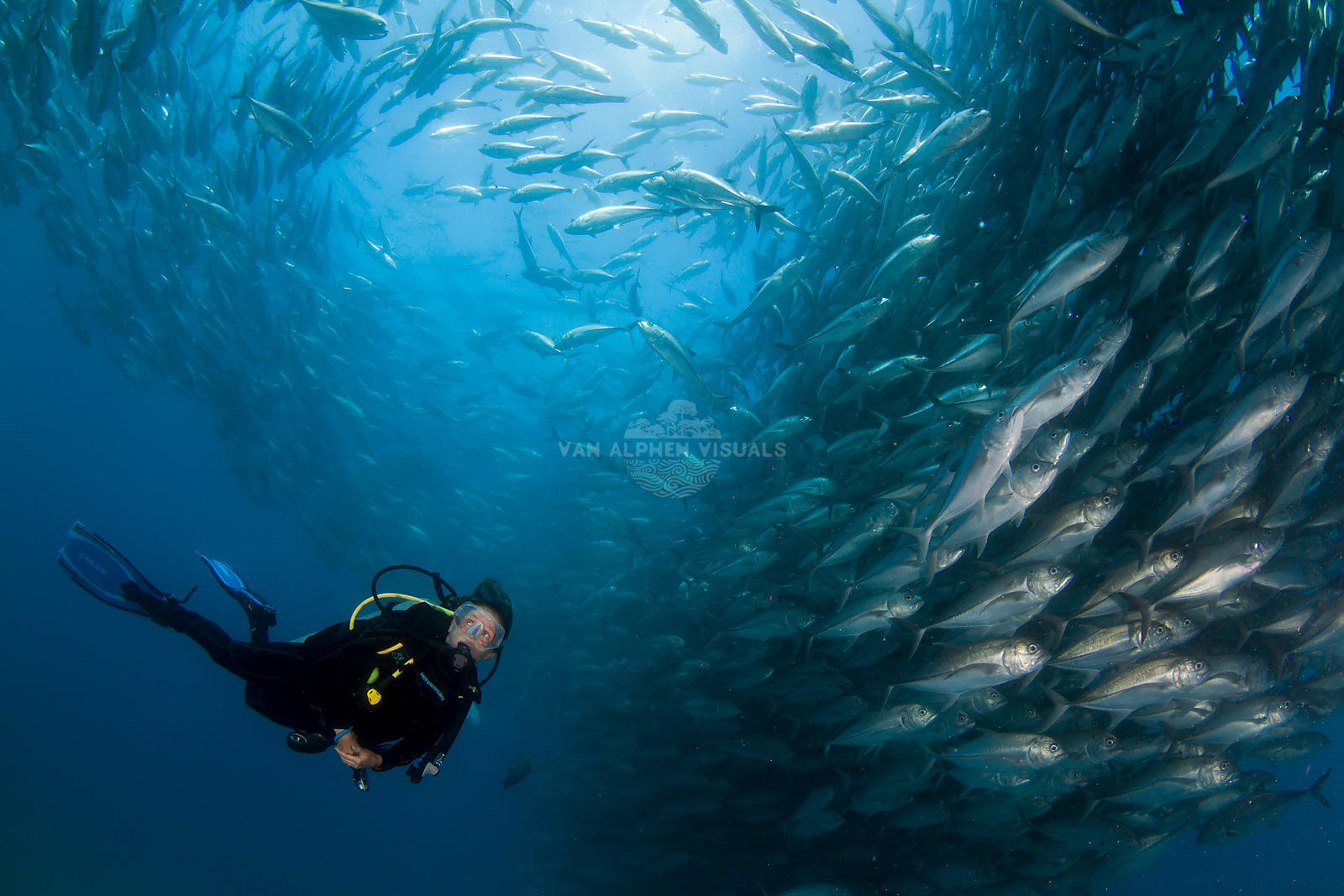 Diving in Cabo Pulmo, Mexico.
