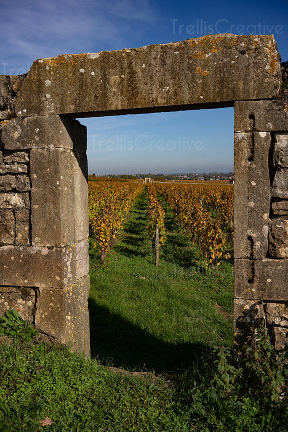 Looking through an old stone archway of a vineyard clos or block in Burgundy, France