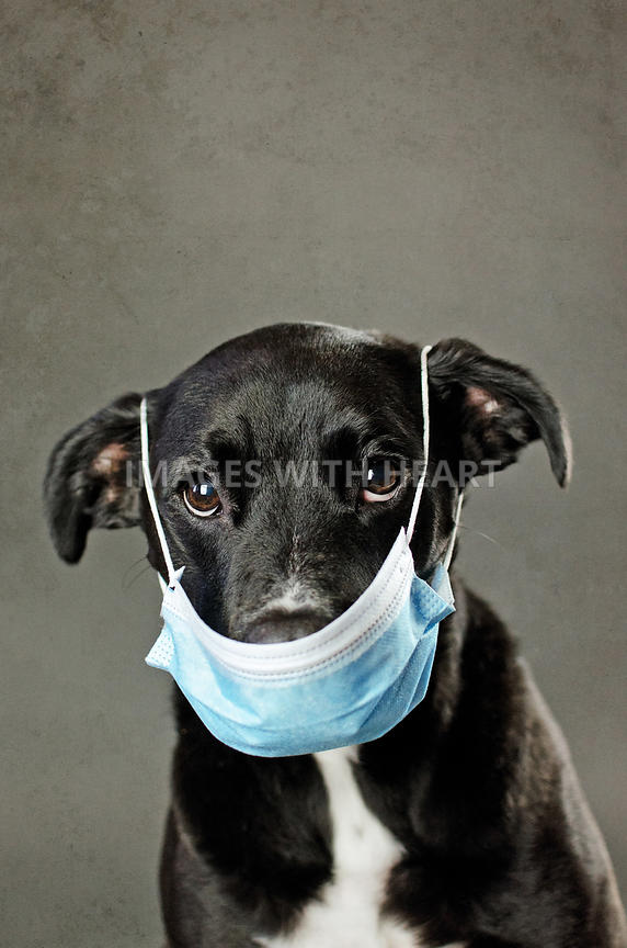 KH_Black_Dog_In_Surgical_Mask