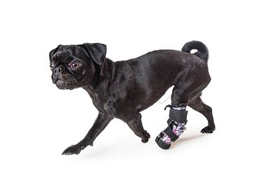 Dog With Injured Leg Running