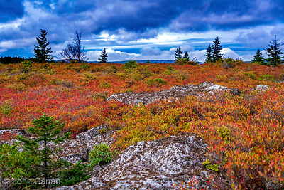 Bear Rocks Preserve -  a cornerstone of a diverse and complex ecosystem of windswept heath barrens.