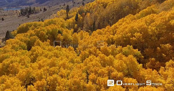 June Lake Area California in Fall Colours