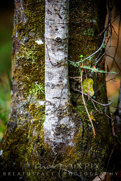 Detail of textured tree trunk with moss and lichen