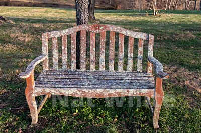 Lichen_Bench-3467_December_27_2020_NAT_WHITE