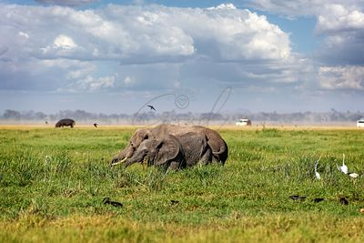 Elephant Mother and Baby in Amboseli Kenya