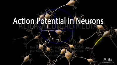 Action potential in neuron NARRATED animation, FULL version