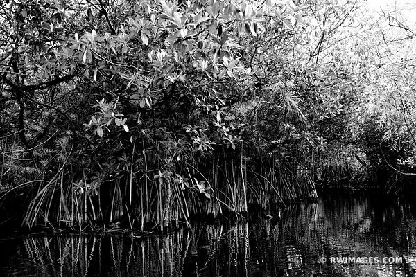 TURNER RIVER MANGROVE TUNNEL CANOE TRAIL BIG CYPRESS NATIONAL PRESERVE EVERGLADES FLORIDA BLACK AND WHITE