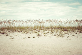 Pensacola Florida Beach Grass Beachscape Retro Photo