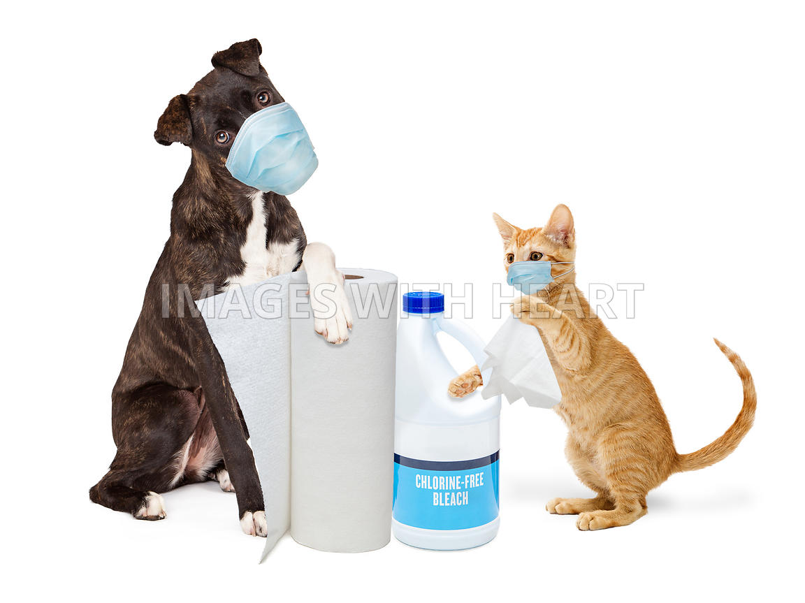 Dog and Cat Wearing Masks With Virus Germ Cleaning Supplies