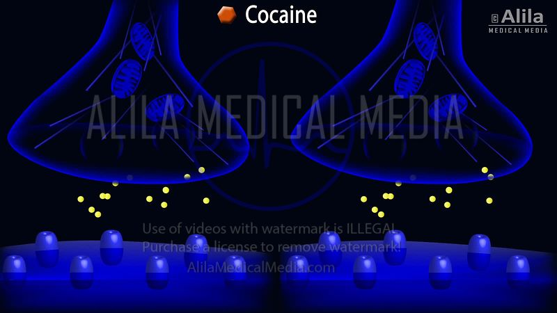 Cocaine action on dopamine synapse animation.